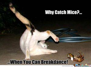 break-dancing-cat_o_839686